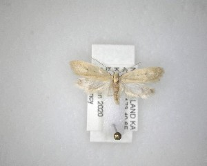 (Tinegna - NZAC04231520)  @11 [ ] No Rights Reserved (2020) Unspecified Landcare Research, New Zealand Arthropod Collection