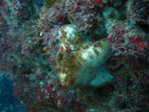 (Ancorinidae - NZSPG016)  @11 [ ] Copyright (2014) University of Waikato University of Waikato