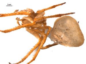 (Araneus cavaticus - BIOUG20600-D02)  @11 [ ] CreativeCommons - Attribution Non-Commercial Share-Alike (2015) G. Blagoev Centre for Biodiversity Genomics