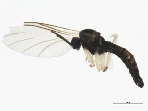 ( - BIOUG01485-H01)  @13 [ ] CC-0 (2012) CBG Photography Group Centre for Biodiversity Genomics