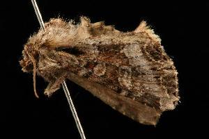 ( - 04HBL00685)  @12 [ ] CC-0 (2010) CBG Photography Group Centre for Biodiversity Genomics