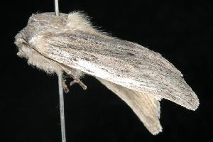 ( - Moth 471.02SA)  @12 [ ] CC-0 (2010) CBG Photography Group Centre for Biodiversity Genomics