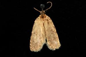 ( - moth89.02)  @13 [ ] CreativeCommons - Attribution Non-Commercial Share-Alike (2010) CBG Photography Group Centre for Biodiversity Genomics