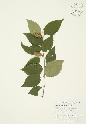 ( - AP267)  @11 [ ] Copyright (2009) Steven Newmaster University of Guelph BIO Herbarium