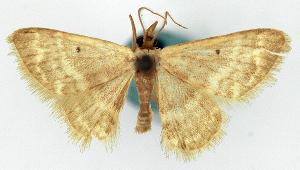 ( - CCDB-11876-F03)  @11 [ ] CreativeCommons - Attribution Non-Commercial Share-Alike (2014) David Polluck Centre for Biodiversity Genomics