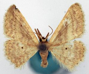 ( - CCDB-11876-F11)  @11 [ ] CreativeCommons - Attribution Non-Commercial Share-Alike (2014) David Polluck Centre for Biodiversity Genomics