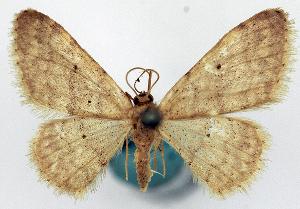 ( - CCDB-11876-G10)  @11 [ ] CreativeCommons - Attribution Non-Commercial Share-Alike (2014) David Polluck Centre for Biodiversity Genomics