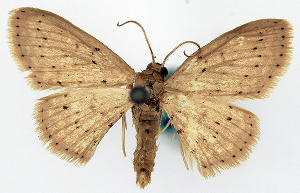 ( - CCDB-11876-H11)  @11 [ ] CreativeCommons - Attribution Non-Commercial Share-Alike (2014) David Polluck Centre for Biodiversity Genomics