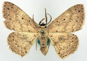 (Pseuderythrolophus - CCDB-16669_F06)  @11 [ ] CreativeCommons - Attribution Non-Commercial Share-Alike (2014) David Polluck Centre for Biodiversity Genomics