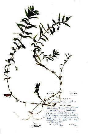 (Groenlandia - NMW2020)  @11 [ ] CreativeCommons - Attribution (2012) National Museum Wales National Museum Wales