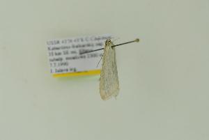 (Udea cretacea - BC MTD Lep 01612)  @12 [ ] CreativeCommons - Attribution Non-Commercial (2011) M. Nuss Senckenberg Museum of Zoology, Dresden