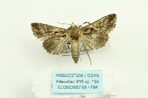( - ARB00027338)  @13 [ ] Copyright  SCDBC-KIZ-CAS, Imaging group Kunming Institute of Zoology, CAS