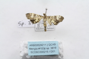 ( - ARB00029211)  @12 [ ] Copyright  SCDBC-KIZ-CAS, Imaging group Kunming Institute of Zoology, CAS