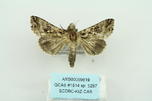 ( - ARB00009619)  @13 [ ] Copyright  SCDBC-KIZ-CAS, Imaging group Kunming Institute of Zoology, CAS