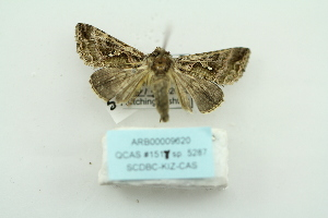 ( - ARB00009620)  @12 [ ] Copyright  SCDBC-KIZ-CAS, Imaging group Kunming Institute of Zoology, CAS