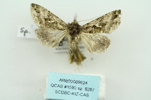 ( - ARB00009624)  @12 [ ] Copyright  SCDBC-KIZ-CAS, Imaging group Kunming Institute of Zoology, CAS