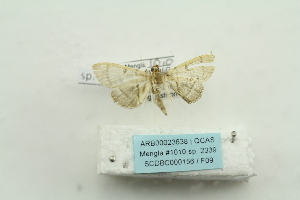( - ARB00023638)  @12 [ ] Copyright  SCDBC-KIZ-CAS, Imaging group Kunming Institute of Zoology, CAS