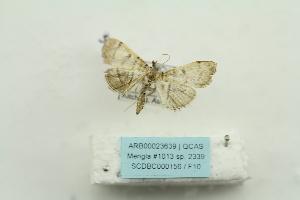 ( - ARB00023639)  @12 [ ] Copyright  SCDBC-KIZ-CAS, Imaging group Kunming Institute of Zoology, CAS