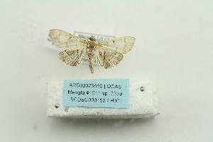 ( - ARB00023660)  @12 [ ] Copyright  SCDBC-KIZ-CAS, Imaging group Kunming Institute of Zoology, CAS