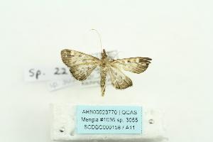 ( - ARB00023770)  @11 [ ] Copyright  SCDBC-KIZ-CAS, Imaging group Kunming Institute of Zoology, CAS