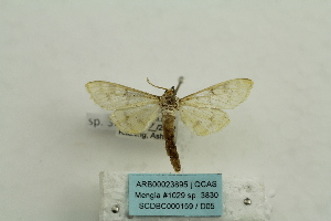 ( - ARB00023895)  @13 [ ] Copyright  SCDBC-KIZ-CAS, Imaging group Kunming Institute of Zoology, CAS