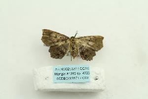 (Eutrogia - ARB00025027)  @11 [ ] Copyright  SCDBC-KIZ-CAS, Imaging group Kunming Institute of Zoology, CAS