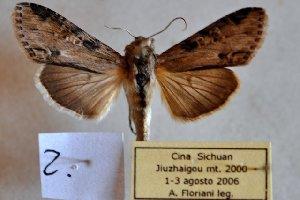 ( - 20098-010806-CH)  @12 [ ] Copyright (2013) Aidas Saldaitis Vilinus Ecological Institute