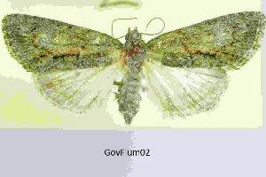 ( - 20189-070889-SW)  @11 [ ] Copyright (2013) Aidas Saldaitis Vilinus Ecological Institute