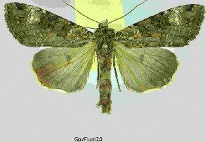 ( - 20207-050710-RU)  @14 [ ] Copyright (2013) Aidas Saldaitis Vilinus Ecological Institute