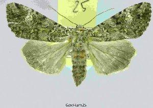 ( - 20208-100708-CH)  @14 [ ] Copyright (2013) Aidas Saldaitis Vilinus Ecological Institute