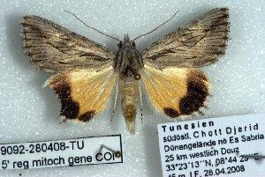 (Anydrophila sabouraudi - 9092-280408-TU)  @14 [ ] Unspecified (default): All Rights Reserved  Unspecified Unspecified