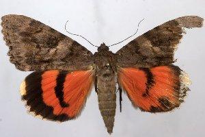 ( - 1086-100609-TX)  @11 [ ] Copyright (2011) Aidas Saldaitis Vilinus Ecological Institute