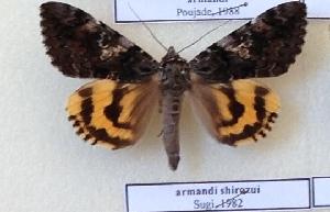 (Catocala shirozui - 20474-000000-TA)  @13 [ ] Copyright (2014) Balazs Benedek Research coll of Balazs Benedek