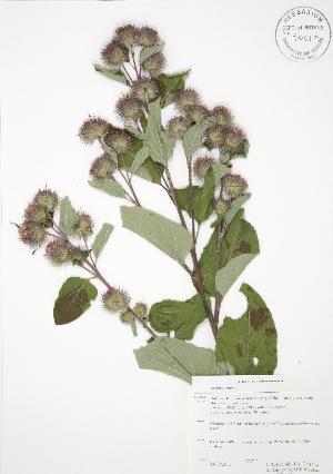 ( - RBG-Blitz 001)  @11 [ ] Copyright (2009) Steven Newmaster University of Guelph BIO Herbarium