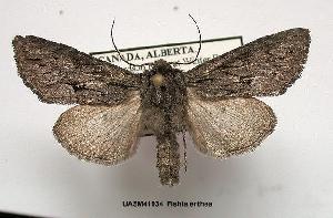 (Fishia yosemitae - UASM41934)  @14 [ ] Unspecified (default): All Rights Reserved  Unspecified Unspecified