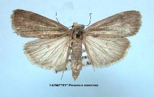 (Proxenus mendosa - UASM77817)  @14 [ ] Unspecified (default): All Rights Reserved  Unspecified Unspecified
