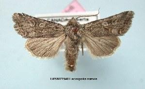 (Lacinipolia naevia - UASM77840)  @14 [ ] Unspecified (default): All Rights Reserved  Unspecified Unspecified