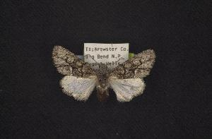 (Oxycnemis grandimacula - CNCNoctuoidea7656)  @14 [ ] Unspecified (default): All Rights Reserved  Unspecified Unspecified