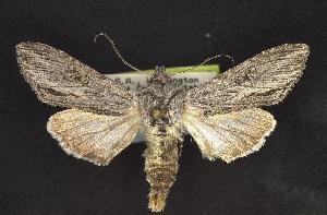 ( - CNCNoctuoidea10121)  @14 [ ] CreativeCommons - Attribution Non-Commercial Share-Alike (2010) CBG Photography Group Centre for Biodiversity Genomics