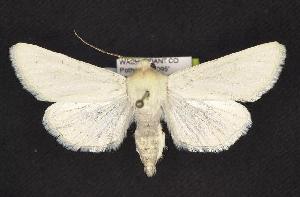 (Copablepharon spiritum - CNCNoctuoidea10265)  @14 [ ] CreativeCommons - Attribution Non-Commercial Share-Alike (2010) CBG Photography Group Centre for Biodiversity Genomics
