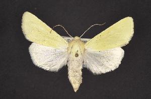 ( - CNCNoctuoidea10355)  @14 [ ] CreativeCommons - Attribution Non-Commercial Share-Alike (2010) CBG Photography Group Centre for Biodiversity Genomics