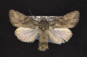 ( - CNCNoctuoidea7969)  @13 [ ] CreativeCommons - Attribution Non-Commercial Share-Alike (2010) CBG Photography Group Centre for Biodiversity Genomics