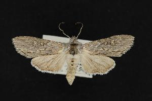 ( - CNCNoctuoidea11892)  @14 [ ] CreativeCommons - Attribution Non-Commercial Share-Alike (2010) CBG Photography Group Centre for Biodiversity Genomics