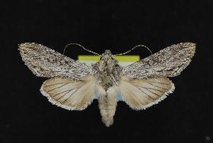 ( - CNCNoctuoidea12062)  @14 [ ] CreativeCommons - Attribution Non-Commercial Share-Alike (2010) CBG Photography Group Centre for Biodiversity Genomics