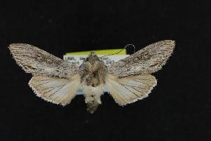 ( - CNCNoctuoidea12068)  @14 [ ] CreativeCommons - Attribution Non-Commercial Share-Alike (2010) CBG Photography Group Centre for Biodiversity Genomics