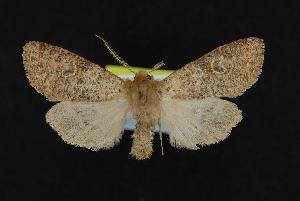 ( - CNCNoctuoidea12098)  @14 [ ] CreativeCommons - Attribution Non-Commercial Share-Alike (2010) CBG Photography Group Centre for Biodiversity Genomics