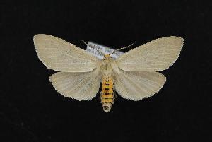 ( - CNCNoctuoidea12243)  @14 [ ] CreativeCommons - Attribution Non-Commercial Share-Alike (2010) CBG Photography Group Centre for Biodiversity Genomics