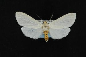 ( - CNCNoctuoidea12244)  @14 [ ] CreativeCommons - Attribution Non-Commercial Share-Alike (2010) CBG Photography Group Centre for Biodiversity Genomics