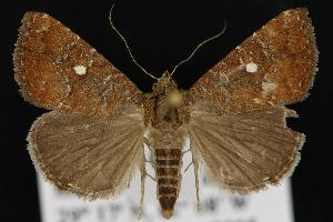 ( - CNCNoctuoidea12852)  @15 [ ] CreativeCommons - Attribution Non-Commercial Share-Alike (2010) CBG Photography Group Centre for Biodiversity Genomics