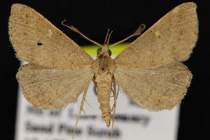 ( - CNCNoctuoidea12876)  @14 [ ] CreativeCommons - Attribution Non-Commercial Share-Alike (2010) CBG Photography Group Centre for Biodiversity Genomics